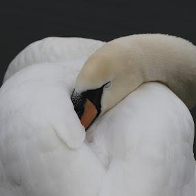 by Igmar Kranjski - Animals Birds