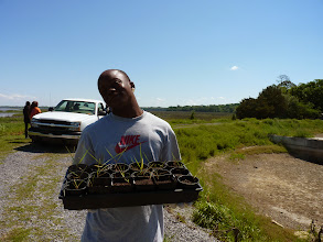 Photo: 2013 marsh seedlings