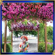 App Modern Garden Photo Frames APK for Windows Phone