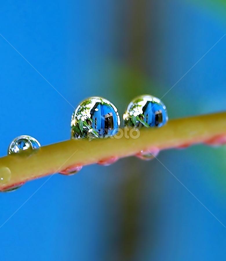 by Eko Adiyanto - Nature Up Close Flowers - 2011-2013