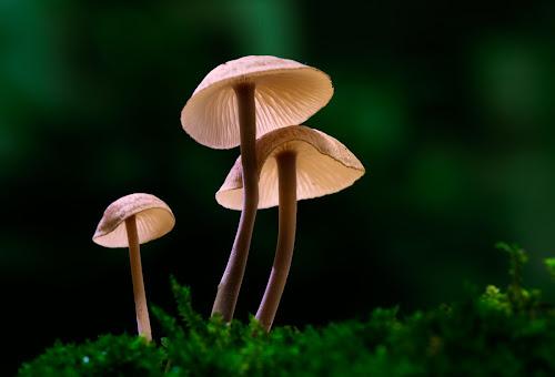 A Family by Tuan Pham - Nature Up Close Mushrooms & Fungi ( mushrooms, macro, moss, forest, green, nature, light, wet, vietnam, cute )