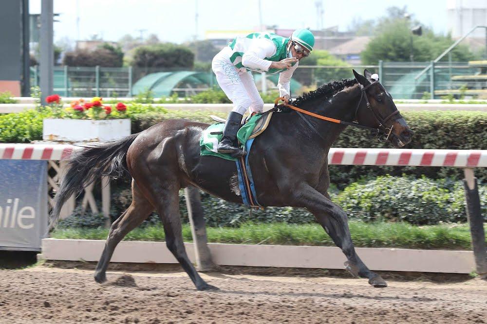 Para Win Here fue un trámite y ya vislumbra un nuevo Gran Premio - C. Henríquez S.