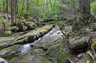 Photo: Brook in the forest at Townshend State Park by Linda Carlsen-Sperry