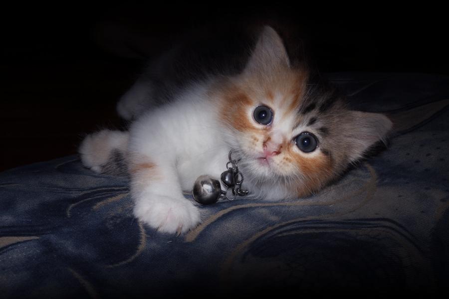 meong by Zayed Rafa'i - Animals - Cats Kittens
