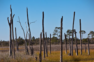 Photo: dead palms become bird condos