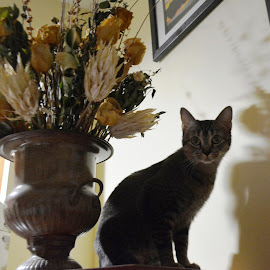by Beth Bowman - Animals - Cats Portraits