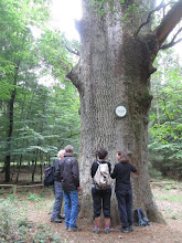 Photo: le Gros Chêne