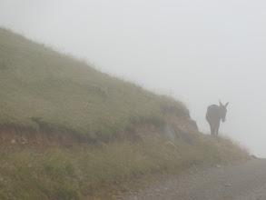 Photo: Persi tra le nebbie... ma almeno lui è senza zaino!