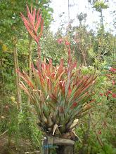 Photo: Weird plant in garden 3.