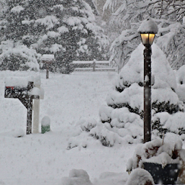 A Light in the Storm #1 by Tony Huffaker - City,  Street & Park  Neighborhoods ( yard, storm, light, snow, winter )