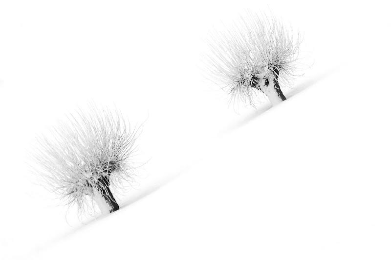 duefiocchi di marcophoto