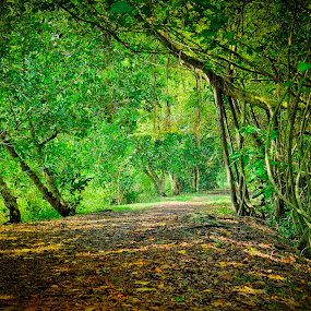 long road by Faareast Mk - Nature Up Close Trees & Bushes ( fall leaves on ground, fall leaves, kuala selangor, green, trees, bush, malaysia, road )
