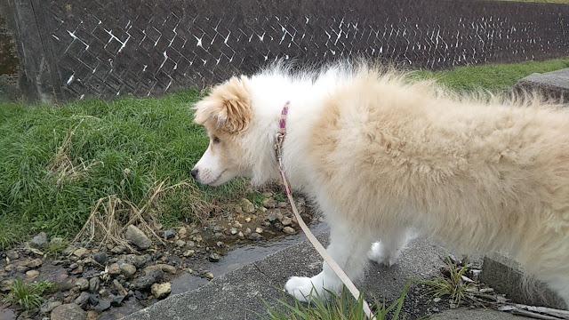 シェリー初散歩