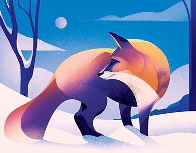 Image result for fox drinking from pool illustration