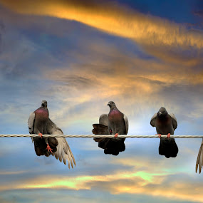 Birds on a wire by Mohamad Sa'at Haji Mokim - Animals Birds ( birds )