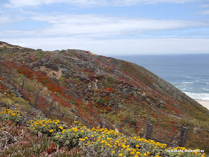 Photo: Colorful hillside along Highway One, Big Sur