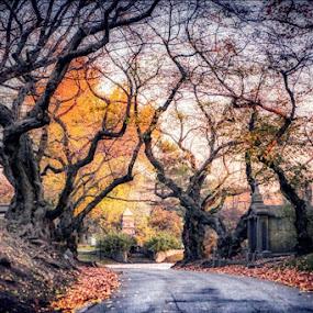 Green-wood  by Aurelio Firmo - City,  Street & Park  City Parks ( fall, brooklyn, autumn, cemetery,  )