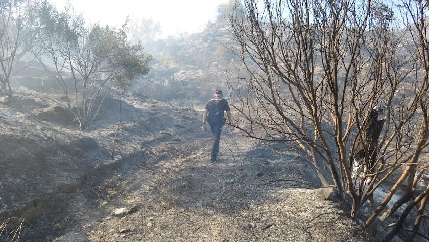 Terreno calcinado tras el incendio del pasado 21 de junio.
