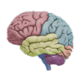 3D Brain apk