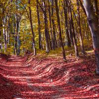 il sentiero in autunno di