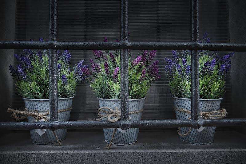 solitudine riempita di fiori di Sil-M