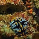 Phyllidia marindica