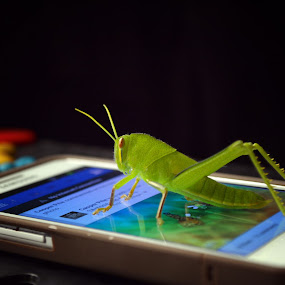 i will create acount facebook too.... by Casper Prie - Animals Insects & Spiders
