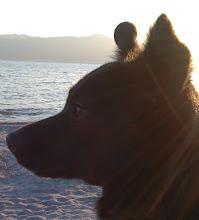 Photo: Malia on the beach at Salton Sea, CA