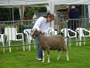 Photo: Klasse 1: 1 jarige toggenburger geiten. 1a. Franka vd Lage Landen.