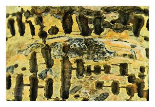 Photo: Eastern Sierras-20120716-422