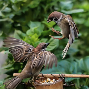 Extreme landing by Deny Satria - Animals Birds ( wild, birds )
