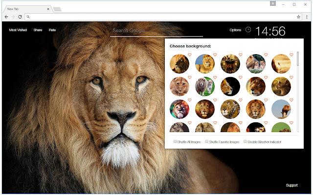 Lion Wallpapers Custom Wild Cat Lions New Tab