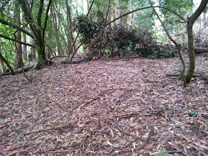 Photo: The stunted natives are doing a remarkable job of keeping most of the bark off the floor.