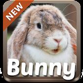Bunny Theme