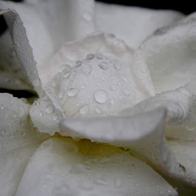Silk Rain by Zoë Jackson - Nature Up Close Flowers - 2011-2013