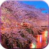 Sakura Live Wallpaper for winphone