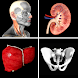 Anatomy Quiz Pro - Androidアプリ