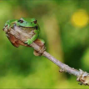 Jump by Zvonko Ferčič - Animals Amphibians