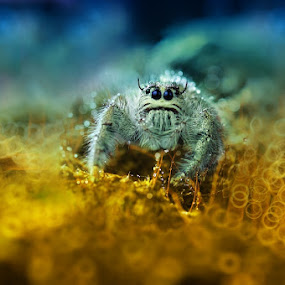 look into my eyes by Vandie Ndie - Animals Insects & Spiders