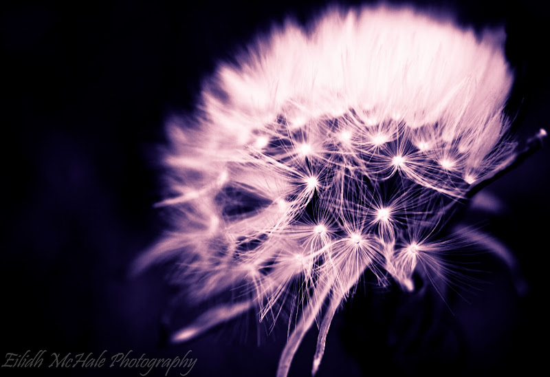 Photo: Day 187 of my #365project not sure if weeds count but I'm also sharing this for #floralfriday by +Tamara Pruessner