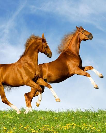 無料解谜Appの馬ゲームの困惑|記事Game