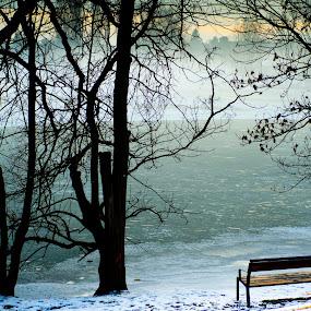 Vienna Alte Donau Winter Recreation by Frederik Schulz - City,  Street & Park  City Parks ( wien, vienna, danube, austria )