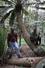 Photo: Dominic and a scout with the cycad - Encephalartos Tegulaneus
