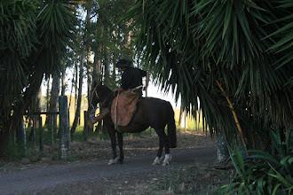 Photo: Gaucho, wartend auf die Rinder