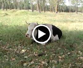 Video: Poșta Rât, in zona  vedere - 2009 08 23