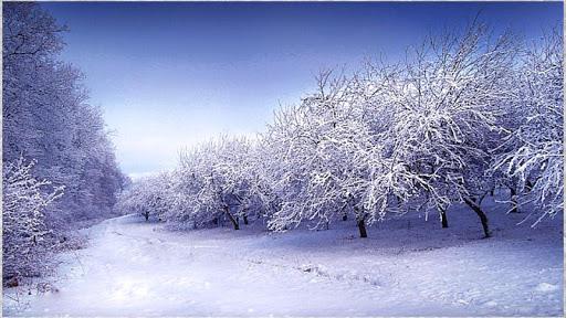 1080p Winter Photography