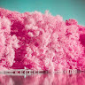 com.camerafilter.pinkanalog