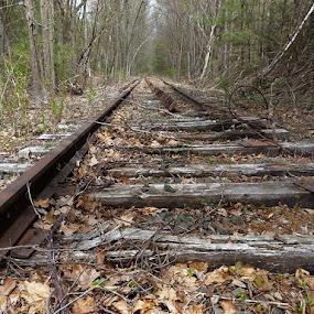 Abandoned Line by Martin Stepalavich - Transportation Railway Tracks