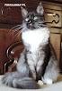Koteczka Coco Dom Futrzaków*PL-wiek 9 miesięcy