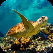 Underwater Sea Turtle 3D LWP